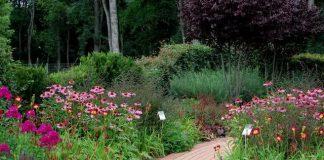 Gepflasterter Weg zwischen einem Blumenbeet